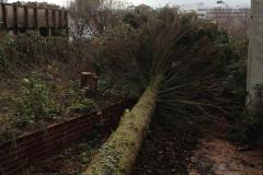 Kopie von Baumfällarbeiten (8)