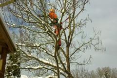 Kopie von 03 Titel Baumpflege