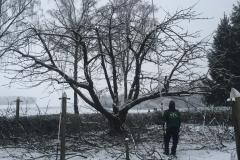 Kopie von Baumpflege (56)