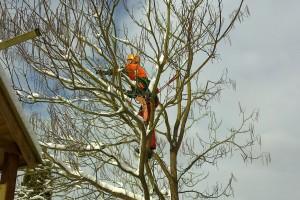 BaumpflegeWinter