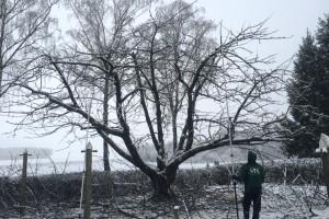 BaumpflegeObstbaum